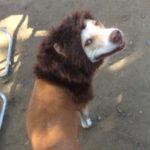 Profile picture of DADA